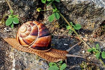 Le temps et le Slow
